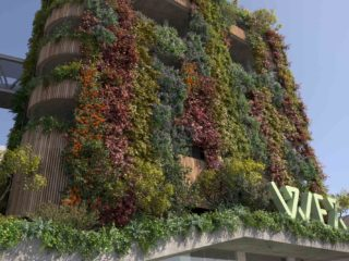 Cities as part of Nature: Architecture